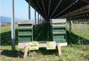 Bees near a solar system